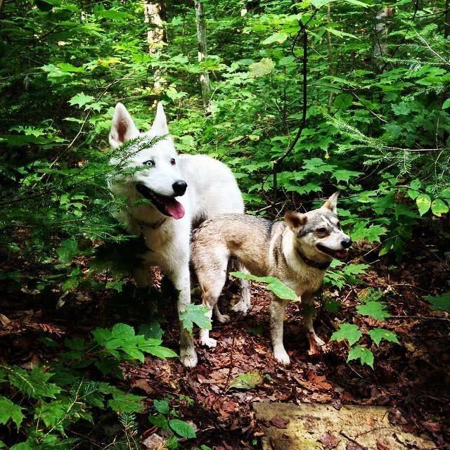 forestdogs-e1534001027951.jpg
